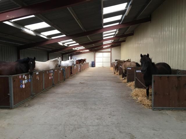 22 boxes poneys