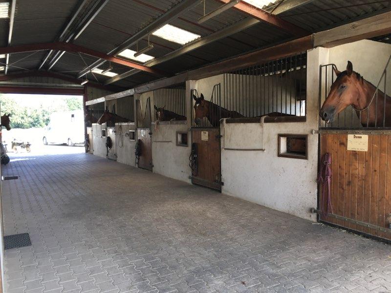 18 boxes chevaux